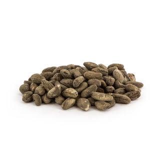 Voacanga Africana (5 grammes)