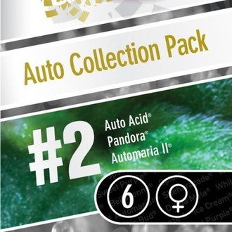 Auto Collection Pack 2 (Paradise Seeds) féminisée