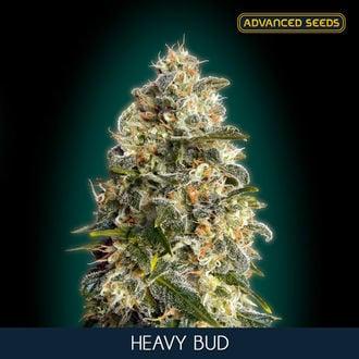 Heavy Bud (Advanced Seeds) Féminisée