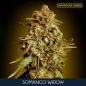 Somango Widow (Advanced Seeds) feminisée