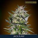 Jack Plant (Advanced Seeds) feminisée