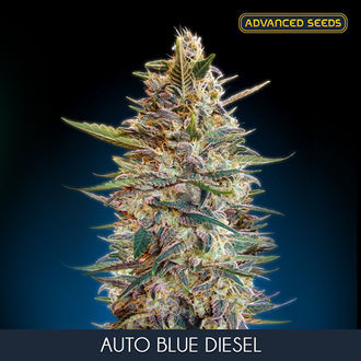 Auto Blue Diesel (Advanced Seeds) féminisée