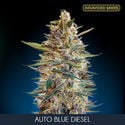 Auto Blue Diesel (Advanced Seeds) féminisée