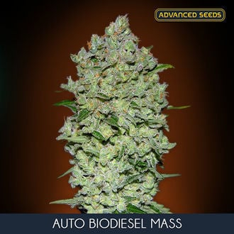 Auto Bio Diesel Mass (Advanced Seeds) feminisée