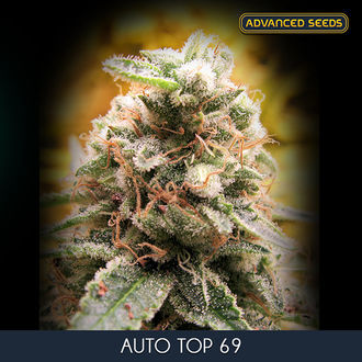 Auto Top 69 (Advanced Seeds) feminisée