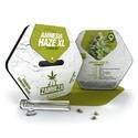 Amnesia Haze XL (Zambeza) féminisée