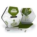 Little Dwarf Autoflowering (Zambeza) féminisée