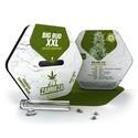 Big Bud XXL Autoflowering (Zambeza) féminisée