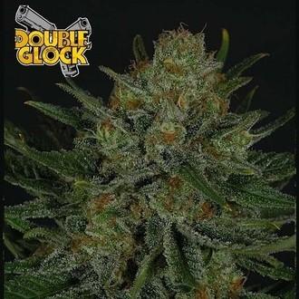 Double Glock (Ripper Seeds) fémnisée