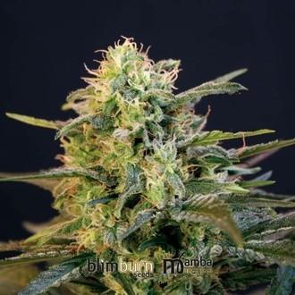 Mamba Negra (Blimburn Seeds) féminisée