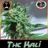 The Kali (Big Buddha Seeds) feminisiert