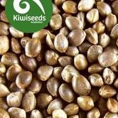 Indoor Mix (Kiwi Seeds) feminisiert