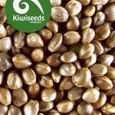 Outdoor Mix (Kiwi Seeds) feminisiert