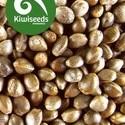 Outdoor Mix (Kiwi Seeds) féminisée