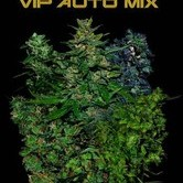VIP Auto Mix (VIP Seeds) féminisée