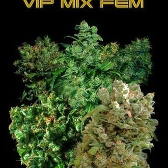 VIP Mix (VIP Seeds) féminisé