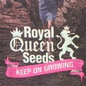 T-Shirt Royal Queen Seeds 'City'