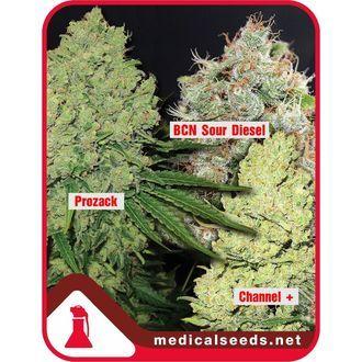 Collection 1 (Medical Seeds) féminisée
