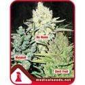 Collection 4 (Medical Seeds) féminisée