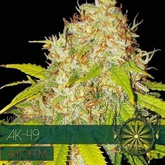 AK-49 Autoflowering (Vision Seeds) féminisée