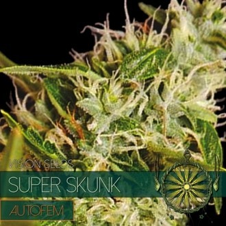 Super Skunk Autoflowering (Vision Seeds) féminisée