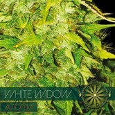 White Widow Autoflowering (Vision Seeds) féminisée
