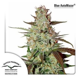 Blue Auto Mazar (Dutch Passion) féminisée