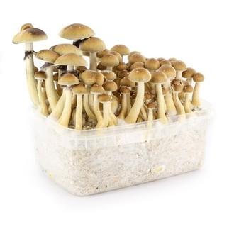 100% Mycelium Kit (Supa Gro) 1200ml