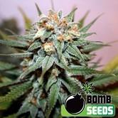 Hash Bomb (Bomb Seeds) féminisée