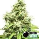 Medi Bomb 1 (Bomb Seeds) féminisée