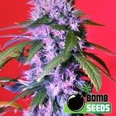 Berry Bomb Auto (Bomb Seeds) féminisée