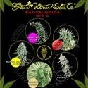 Sativa/Indica Mix C (Greenhouse Seeds) féminisée