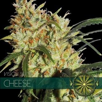 Cheese (Vision Seeds) féminisée