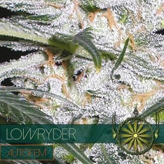 Lowryder (Vision Seeds) féminisée
