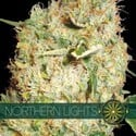 Northern Lights (Vision Seeds) féminisée
