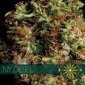 NY Diesel (Vision Seeds) féminisée