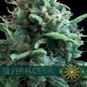 Silver Haze (Vision Seeds) féminisée