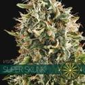 Super Skunk (Vision Seeds) féminisée