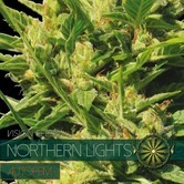 Northern Lights Autoflowering (Vision Seeds) féminisée