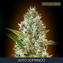 Auto Somango (Advanced Seeds) féminisée