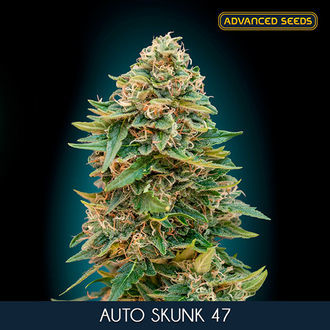 Auto Skunk 47 (Advanced Seeds) féminisée