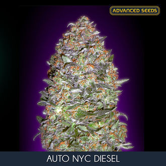 Auto NYC Diesel (Advanced Seeds) féminisée