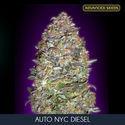 Auto NYC Diesel (Advanced Seeds) féminisée