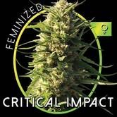 Critical Impact (Vision Seeds) féminisée