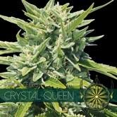 Crystal Queen (Vision Seeds) feminisiert