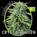 Crystal Queen (Vision Seeds) féminisée