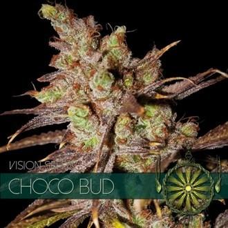 Choco Bud (Vision Seeds) féminisée