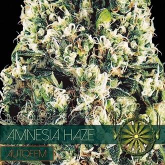 Amnesia Haze Autoflowering (Vision Seeds) féminisée