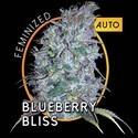 Blueberry Bliss Autoflowering (Vision Seeds) féminisée