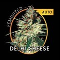 Delhi Cheese Autoflowering (Vision Seeds) féminisée